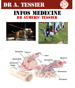 Médecine - Les Muscles